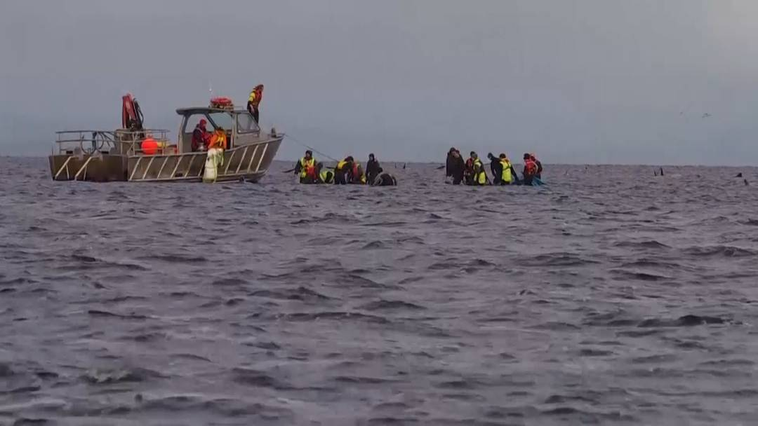 Grosse Rettungsaktion nach Massenstrandung: Fast 100 Wale zurück im Meer