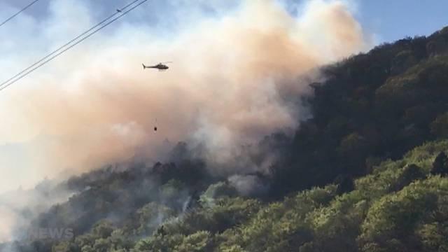 Waldbrand zwischen Ligerz und La Neuveville