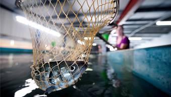 Eine Fischmast bedarf einer speziellen Ausbildung des Landwirts.