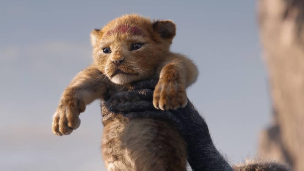 «Lion King – der König der Löwen»