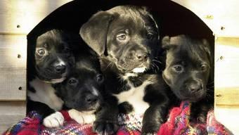 Die Hundewelpen waren gerade einmal zwei Monate alt. (Symbolbild)