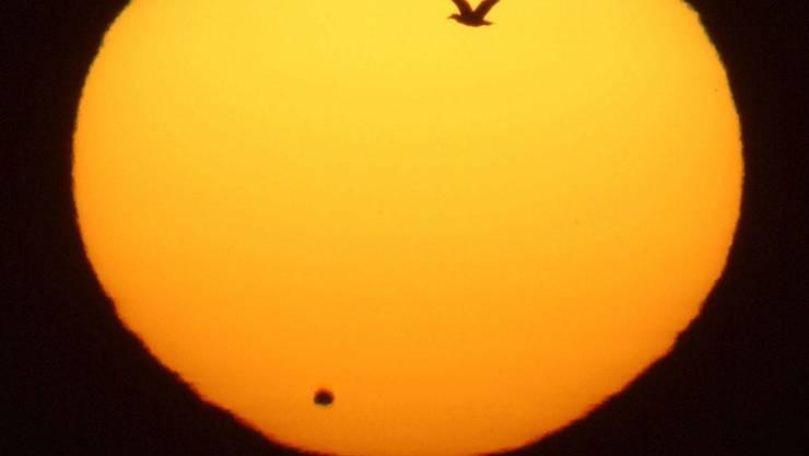 Venus-Transit 2004: Das Bild wurde in der nördlichsten Stadt Japans (Wakkanai) aufgenommen.