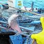 2019 war quantitativ ein gutes Jahr für die Berufsfischer, auch wenn der Einbruch bei den Seeforellen schmerzt.