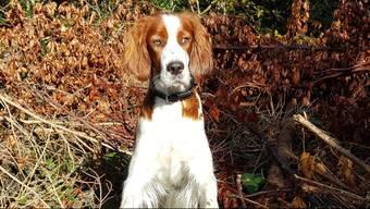 Mehrere Unbekannte halfen Andrea Weber und ihrem Hund, nachdem dieser zusammengebrochen war. Obwohl die Hilfe zu spät kam, ist sie dankbar.