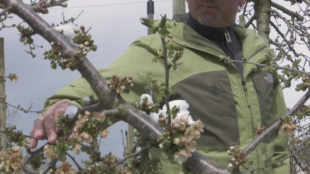 Temperatursturz: Wie Pflanzen und Tiere auf Kälte reagieren