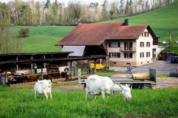 """Die Familie wird an der Handwerkskunstmesse """"Authentica"""" in Windisch ihre Geissenprodukte (Kaese und Fleisch) feil bieten."""