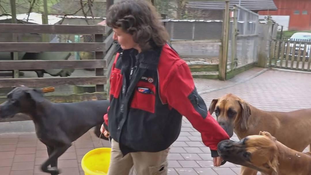 Auf dem Tierlignadenhof in Kaisten gibt es jeden Tag viel zu tun