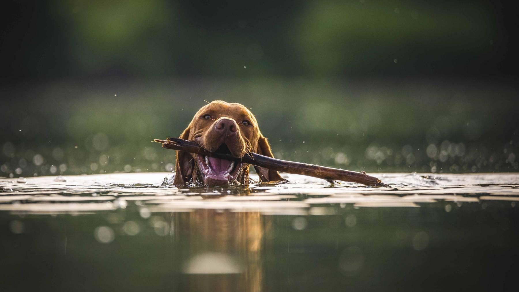 Hund am baden
