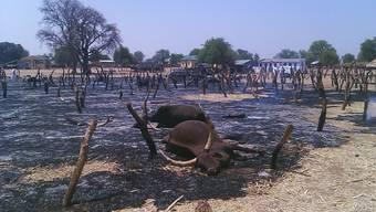 In Nigeria kommt es immer wieder zu tödlichen Überfällen von Viehdieben, wie 2012 in Potiskum im Nordosten des Landes. (Archivbild)