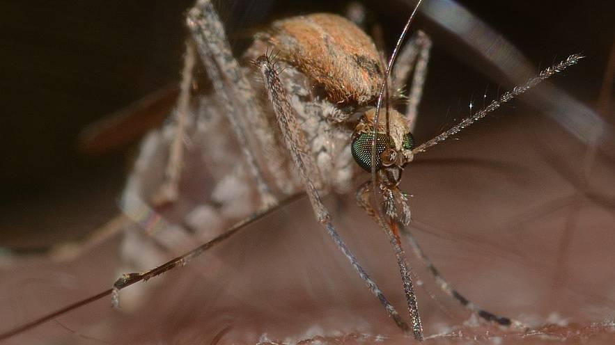 Steht uns eine Mückenplage bevor?