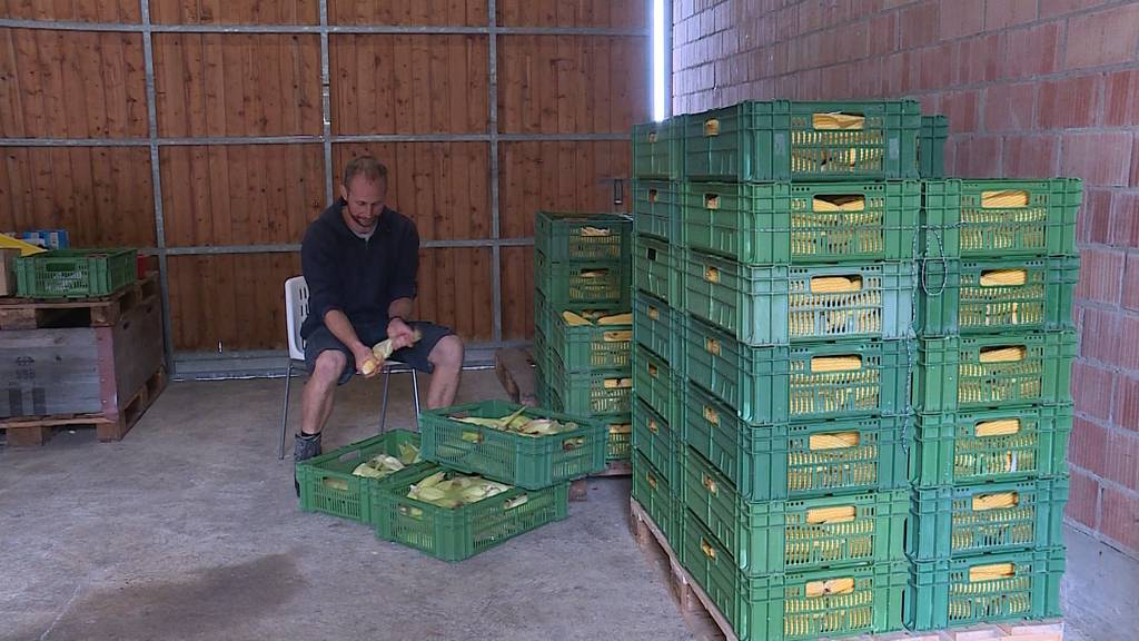 Die Maisernte sorgt in Oberrohrdorf AG für ein Fiasko