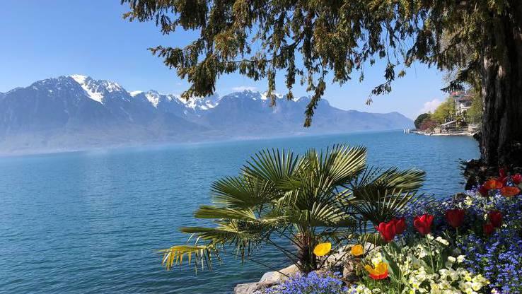 300.000 Blumen werden jedes Jahr an der Seepromenade in Montreux gepflanzt.