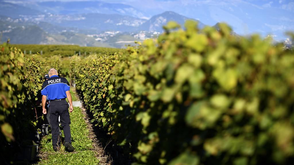 Diebe stehlen fast 8,3 Tonnen Weintrauben