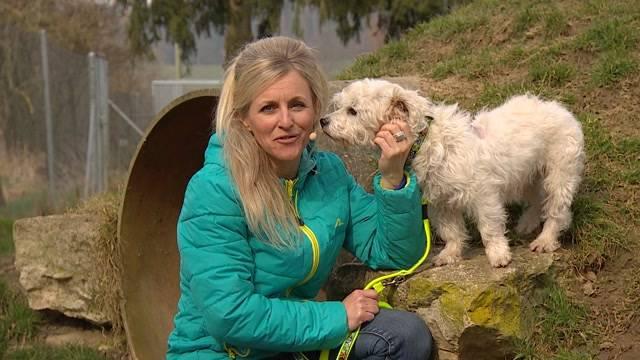 Aus dem Tierheim des Aargauischen Tierschutzvereins
