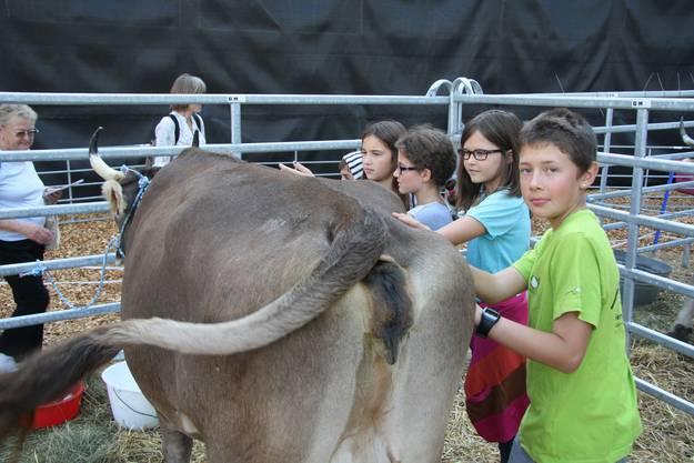 Junge Kuh-Fans