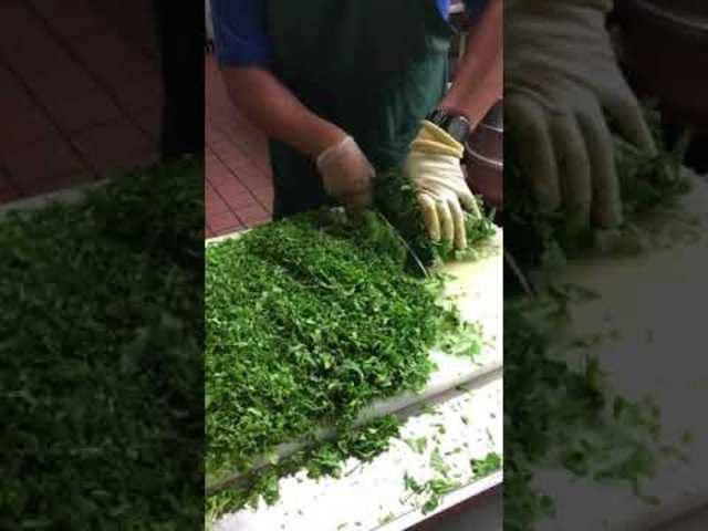 Koch Rogelio des mexikanischen Restaurants El Camino in Fullerton, einem Vorort von Los Angeles, zeigt, wie man eine grosse Menge Koriander schnell fein schneidet.