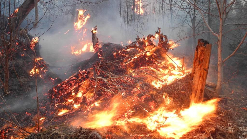 Feuerverbot: Zentralschweiz reagiert auf Trockenheit