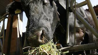 Neue Strategie für Tiergesundheit in der Schweiz (Symbolbild, Archiv)