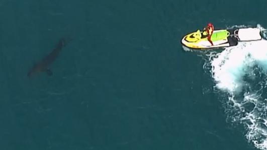 Mutiger Einsatz ohne Happy End: Surfer stirbt nach Hai-Attacke