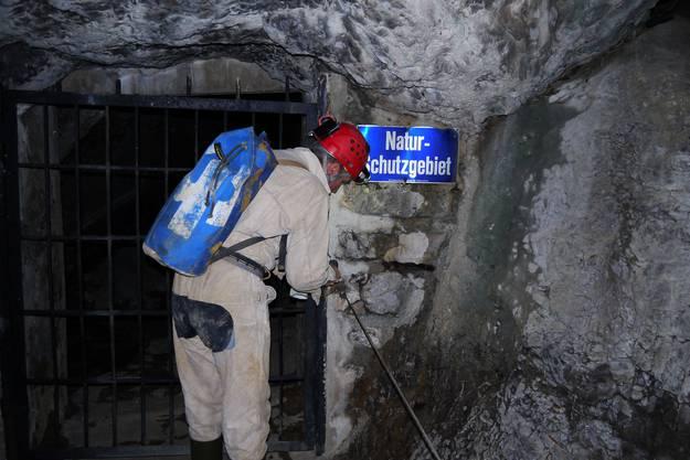 Hinter dem Gitter beginnt das Höhlen-labyrinth, das auch ein Naturschutzgebiet ist. 2011 entdeckten Forscher sogar eine neue Tierart: Der Pseudoblothrus infernus ist ein zwei Millimeter kleines Tierchen mit zwei Greifzangen.