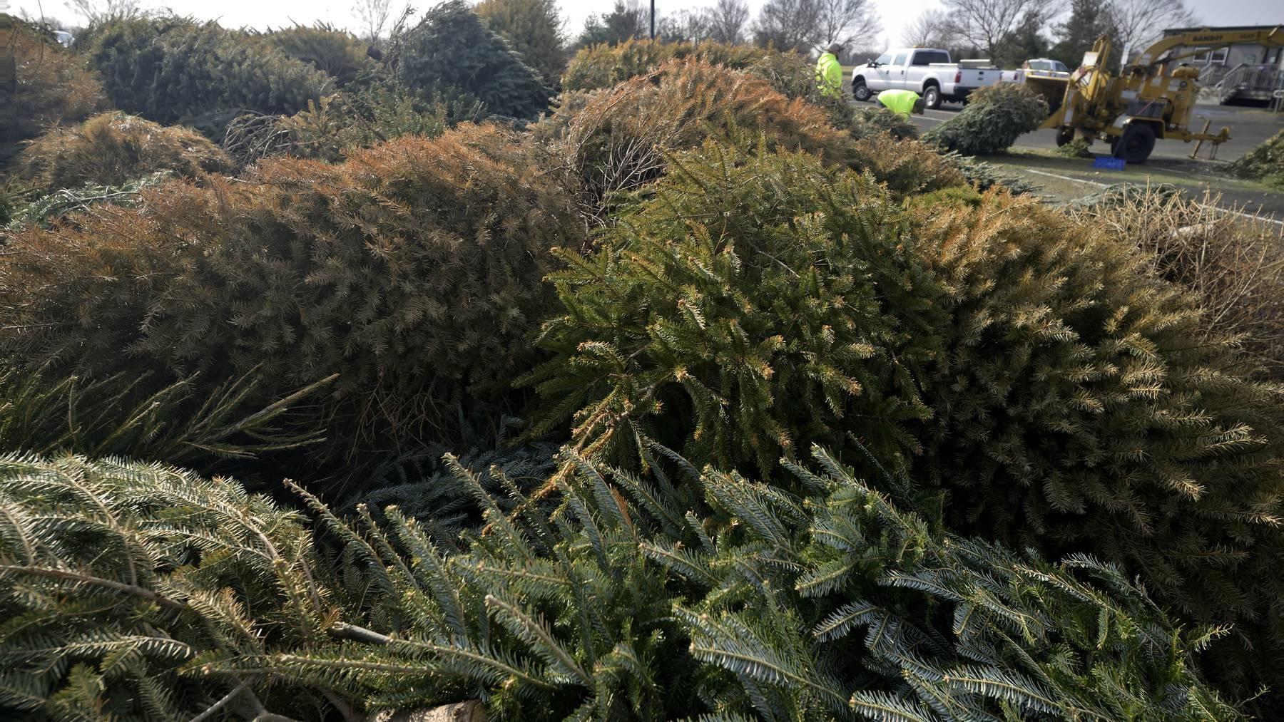 Entsorgen Weihnachtsbaum