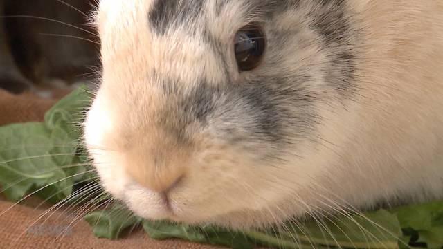 Totgebissene Kaninchen: Riesige Solidaritätswelle für Manuel Lüthi
