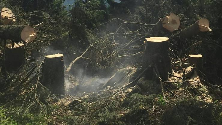 Der Flurbrand wurde durch ein Grillfeuer verursacht. Der Schaden hält sich in Grenzen.