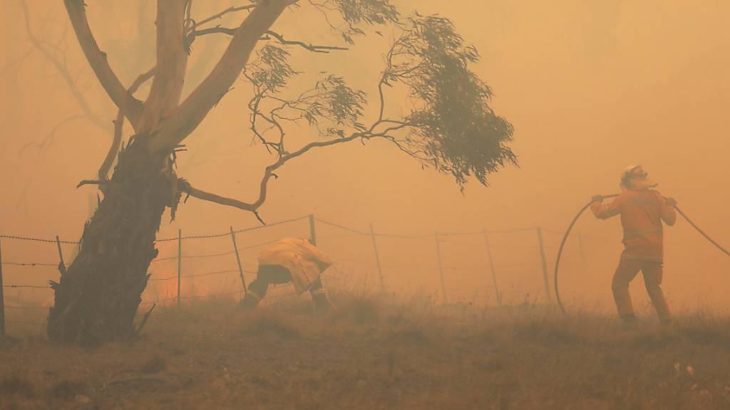 Sechs Tote bei Waldbrand im Osten der Ukraine