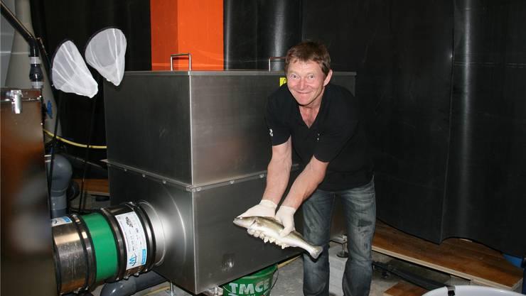 Roland Binder vor der UV-Anlage mit einem 500g schweren Zander. Rosmarie Mehlin