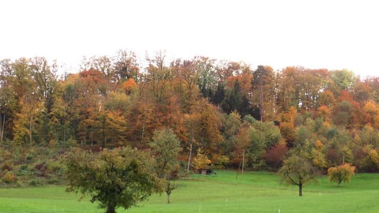 Die Verfärbung der Blätter
