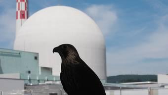 Falken hausen beim Kraftwerk Leibstadt