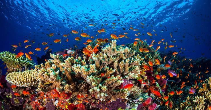 So wie auf diesem Bild sehen aber grosse Teile des Great Barrier Reefs in Australien nicht mehr aus.
