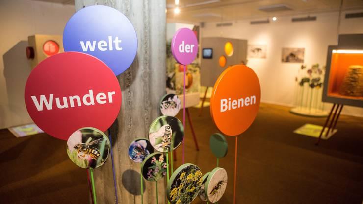 Die Sonderausstellung im Naturmuseum Solothurn