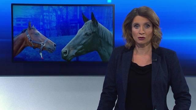 Bahnunterbruch wegen Pferde-Unfall