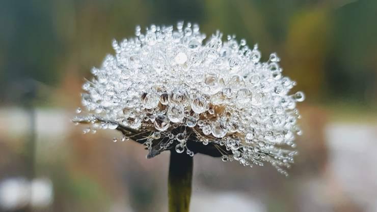 Winterdiamanten