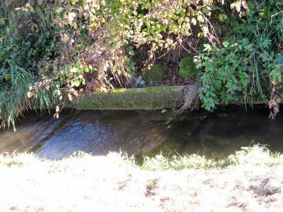 Heute ist der Biberenbach kanalisiert und die Bachsohle teilweise verbaut.