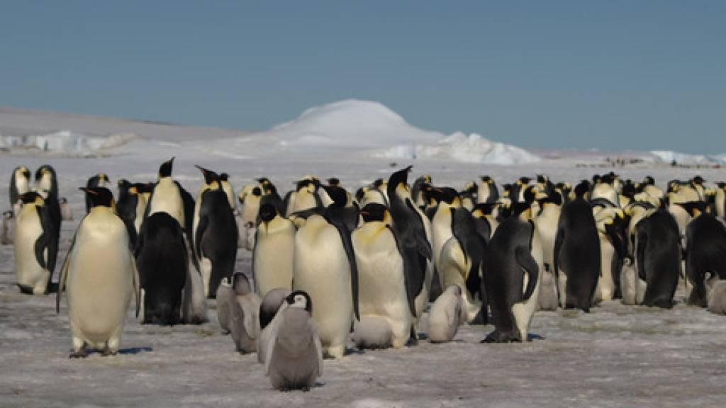 Neue Pinguin-Kolonien in der Antarktis aus dem Weltall entdeckt