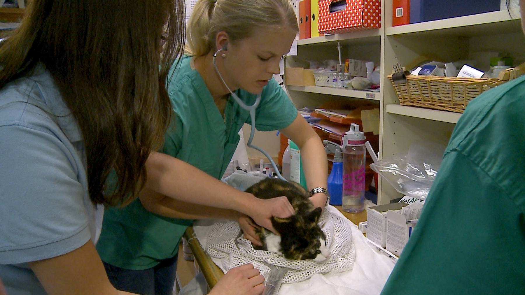 Tierarzt-Tag für wilde Samtpfoten