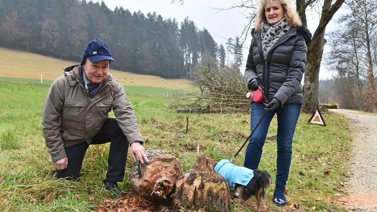 Anton Küpfer und seine Frau Grazyna zeigen die Biberspuren am Rest des mittlerweile gefällten Apfelbaums.