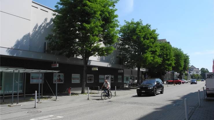 Gegen die geplante Fällung der fünf Robinien an der Solothurnstrasse wird jetzt eine Petition eingereicht.Bild: Andreas Toggweiler