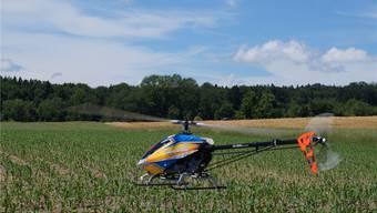 Am Samstag im Gebiet Moos-Ferech in Oberlunkhofen: Ferngesteuertes Helikoptermodell, das mit einem kleinen Strommotor ausgerüstet ist und per Akku funktioniert. Lukas Schumacher