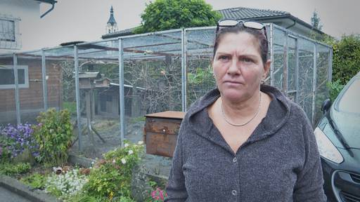 Skurriler Fall: Widnauerin werden über Nacht 20 Vögel geklaut
