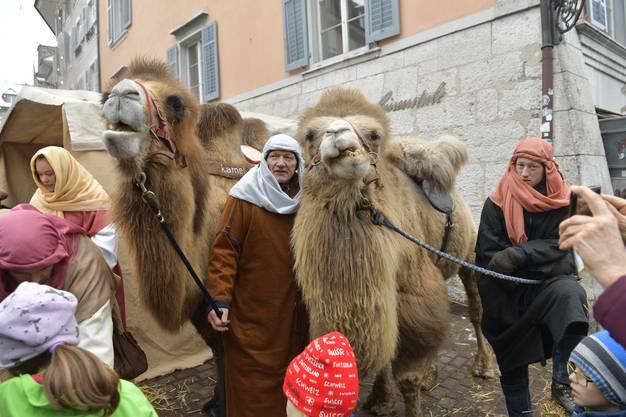 Seltene tierische Gäste zogen durch die Altstadt.