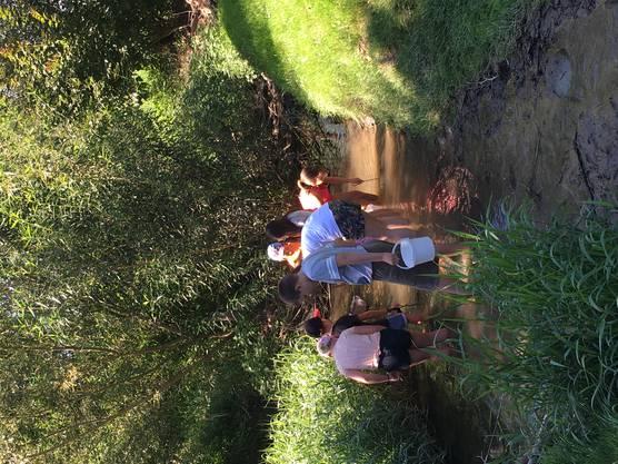 Auf der Suche nach Wasserlebewesen