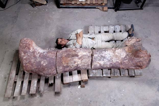 Die neu entdeckte Art erhielt den Namen Lavocatisaurus agrioensis.