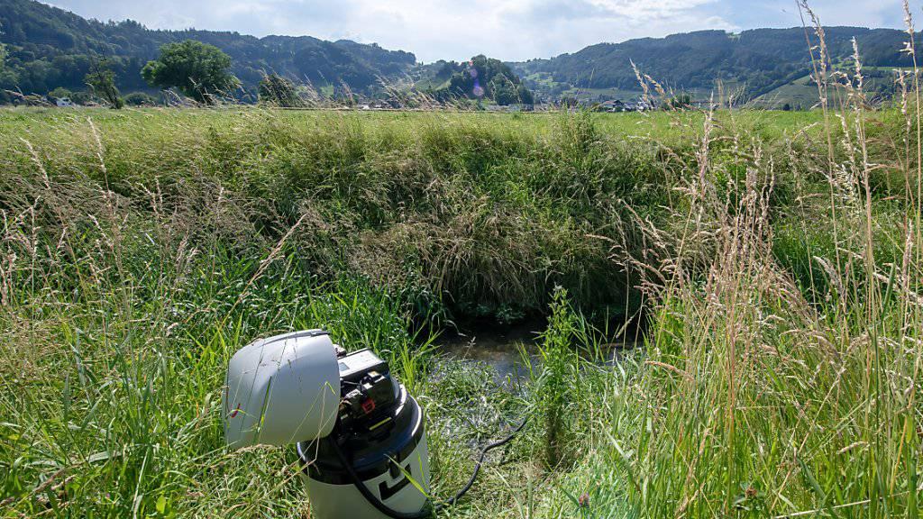 Unter anderem am Äächelibach in Au haben die Fachleute regelmässig Wasserproben entnommen und analysiert.