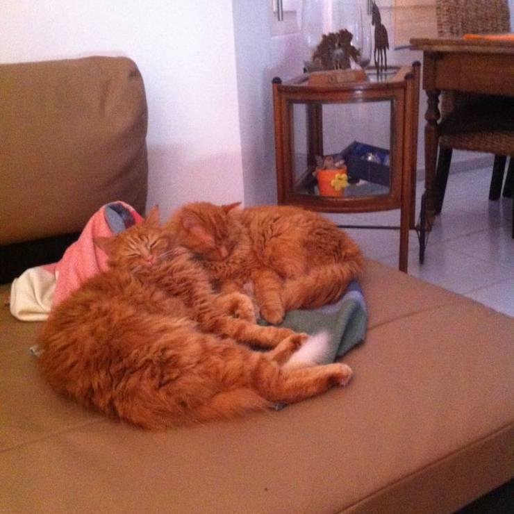 Zwei Garfields auf einmal?