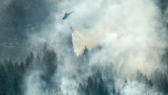 Wie ein Tropfen auf einen heissen Stein: Ein Löschhelikopter wirft über einem Waldbrand bei Ljusdal Wasser ab.