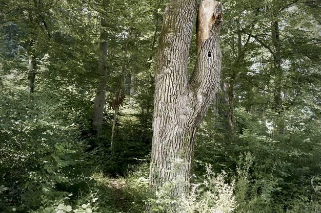 Exkursion zur Begutachtung der trockenheitsbedingten Waldschäden im Pratteler Wald mit Kantonsförster Ueli Meier