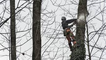 Der Unfall ereignete sich im Zuge von Fällarbeiten in Oberwinterthur. (Symbolbild)